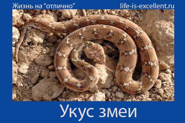 укус змеи,встреча со змеёй, как нападает змея, что делать при укусе змеи, как отсасывать яд змеи, симптомы укуса змеи, помощь при укусе змеи, меры предосторожности в лесу, последствия укуса змеи, случаи укуса змеи, лечение укусов змеи, умершие от укуса змеи, какой укус змеи, кобра, гюрза, эфа, гадюка обыкновенная, щитомордник