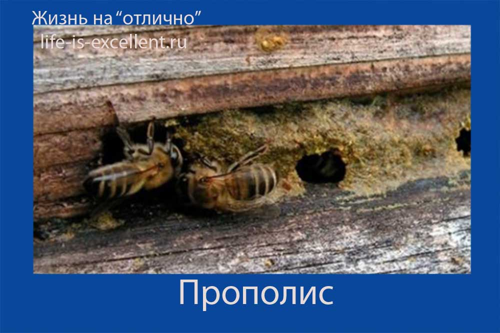 прополис, состав прополиса, что лечат прополисом, как пчёлы делают прополис, как принимать прополис, лечебные свойства прополиса, что такое пыльца, пчелиная обножка, маточное молочко, перга