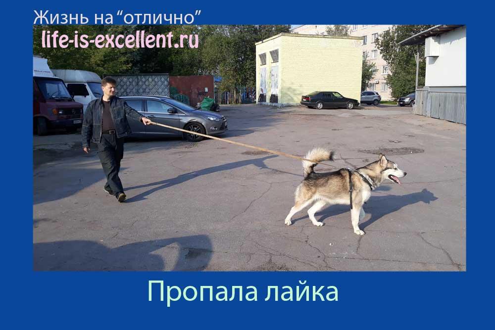 потеряшка, убежала лайка, пропала лайка, сбежала лайка, пропала собака, убежала собака